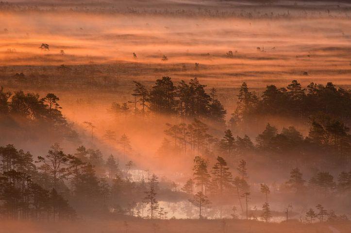 Juara ke 14. Subuh di Tolkuse, area konservasi alam Luitemaa, Pärnu County, Estonia. By Märt Kose [CC BY-SA 3.0 ee license], via Wikimedia Commons