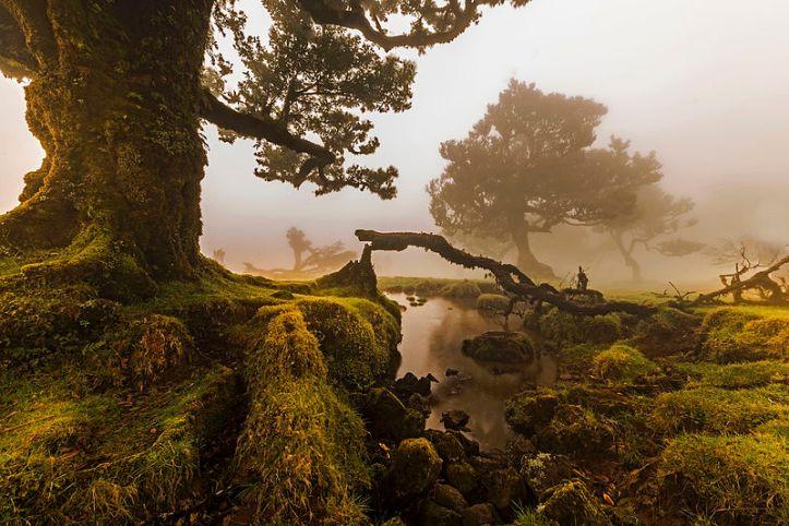 Juara ke 2 pemandangan di  Hutan  Laurisilva (laurel forest)  Madeira, Portugal. Photo by Jnvalves, [CC BY-SA 3.0 license], via Wikimedia Commons