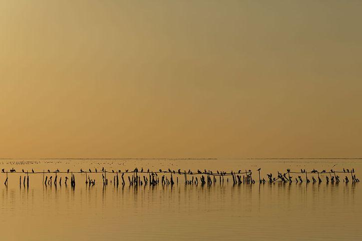 Juara ke 8. Burung laut Cormorants ketika senja di Vaccarès, France. By Ddeveze [CC BY-SA 3.0 license], via Wikimedia Commons